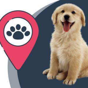 ردیاب حیوانات: راهی برای جلوگیری از گم شدن سگ و گربه!
